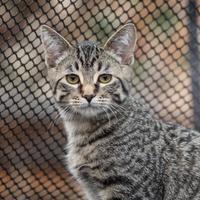 Adopt A Pet :: Caleb - Calgary, AB