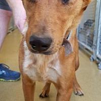 Adopt A Pet :: Mystic - Hillside, IL