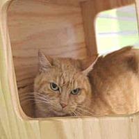 Adopt A Pet :: SUNNY - Hampton Bays, NY