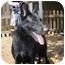 Photo 1 - German Shepherd Dog Dog for adoption in Green Cove Springs, Florida - Jet