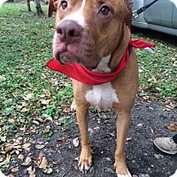 Adopt A Pet :: Mickie - Coral Springs, FL