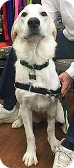 Golden Retriever Mix Dog for adoption in BIRMINGHAM, Alabama - Evie