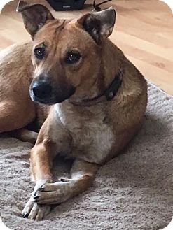 Shepherd (Unknown Type) Mix Dog for adoption in DeForest, Wisconsin - Shrina