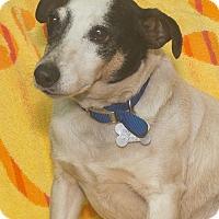 Adopt A Pet :: Jack - Elmwood Park, NJ