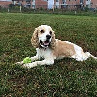 Adopt A Pet :: Owen - Pierrefonds, QC