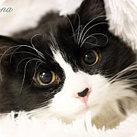 Adopt A Pet :: Squaks - Plymouth, MN