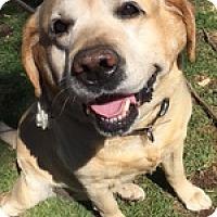 Adopt A Pet :: Mike Boy - Torrance, CA