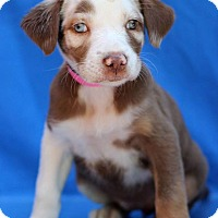 Adopt A Pet :: Patty - Waldorf, MD