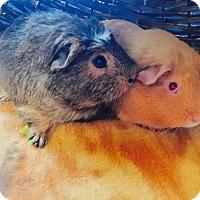Adopt A Pet :: Dave & Phil - Grand Rapids, MI