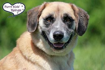 Shepherd (Unknown Type) Mix Dog for adoption in Lee's Summit, Missouri - Bandit
