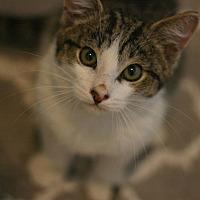 Adopt A Pet :: Alphie - Canoga Park, CA
