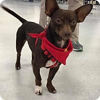 Adopt A Pet :: Batman - Jesup, GA