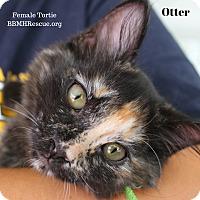 Adopt A Pet :: Otter - Temecula, CA