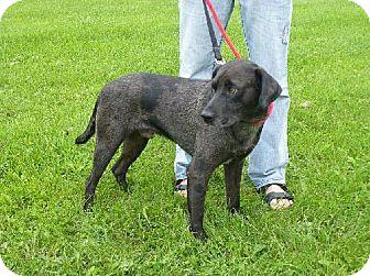 Catahoula Leopard Dog Mix Dog for adoption in London, Ontario - Luke