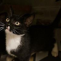 Adopt A Pet :: Tamalle - Monroe, GA