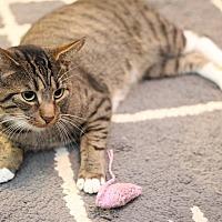 Adopt A Pet :: Jojo - Sykesville, MD