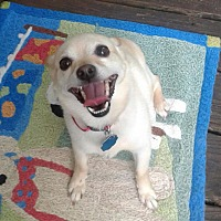 Adopt A Pet :: Sassy - Olive Branch, MS