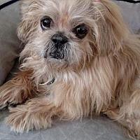 Adopt A Pet :: Gidget - Newaygo, MI