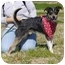 Photo 2 - Terrier (Unknown Type, Small) Mix Dog for adoption in Portsmouth, Rhode Island - Mickey
