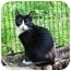 Photo 1 - Domestic Shorthair Cat for adoption in Columbia, Maryland - Davey & Goliath
