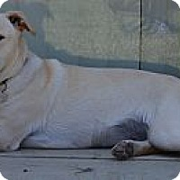 Adopt A Pet :: Hialeah - Simi Valley, CA