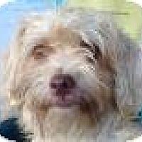 Adopt A Pet :: Kokomo - Canoga Park, CA