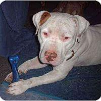 Adopt A Pet :: Tyson - Bakersfield, CA