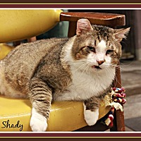 Adopt A Pet :: Slim Shady - New Richmond,, WI