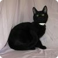 Adopt A Pet :: Sabio - Powell, OH