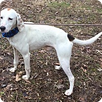Adopt A Pet :: Jerry - Richmond, VA