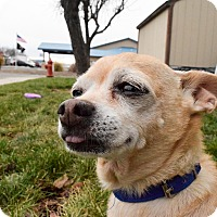 Adopt A Pet :: Chico - Meridian, ID