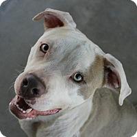 Terrier (Unknown Type, Medium) Dog for adoption in Hilton Head, South Carolina - Lorenzo