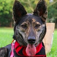 Adopt A Pet :: Lulu - San Ramon, CA