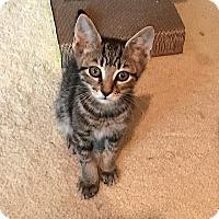 Adopt A Pet :: Zeke - Tampa, FL