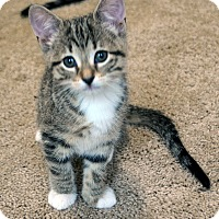 Adopt A Pet :: Chevy - Fort Worth, TX
