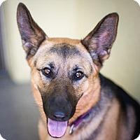 Adopt A Pet :: Daphne - St. Petersburg, FL
