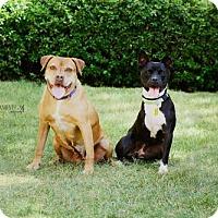 Adopt A Pet :: Deserae - Salt Lake City, UT