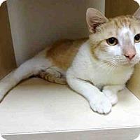 Adopt A Pet :: MANUEL - Raleigh, NC