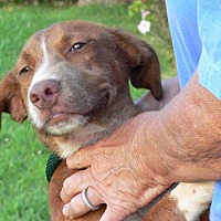 Adopt A Pet :: Recess Great Family Puppy!!! - Rowayton, CT