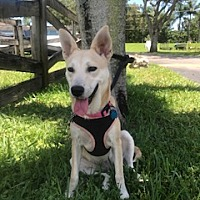 Adopt A Pet :: Venice - Davie, FL