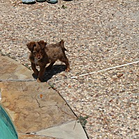 Adopt A Pet :: Dooney - Boston, MA