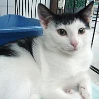 Adopt A Pet :: Jupiter - Germansville, PA