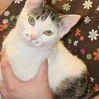 Adopt A Pet :: Belle - Covington, KY