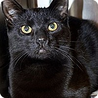 Adopt A Pet :: Jet - Xenia, OH