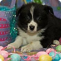 Adopt A Pet :: Glacier - Saskatoon, SK