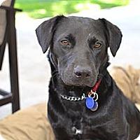 Adopt A Pet :: Zooey - Los Angeles, CA