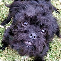 Adopt A Pet :: EEVEE - ADOPTION PENDING - Los Angeles, CA