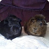 Adopt A Pet :: Rufus & Taco - San Antonio, TX
