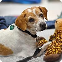 Adopt A Pet :: Cookie - Santa Monica, CA