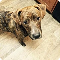 Adopt A Pet :: Frank - Weatherford, TX